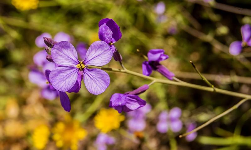 Merawat Tanaman Hias Bunga